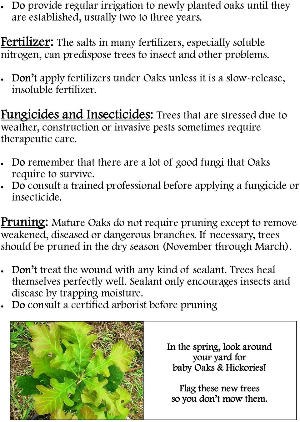 Don t apply fertilizers under Oaks unless it is a slow-release, insoluble fertilizer.