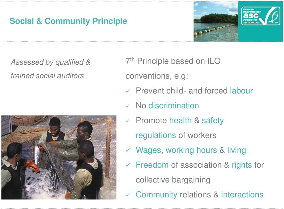 g: tilapia nu verkrijgbaar Prevent child- and forced labour No discrimination Promote health &