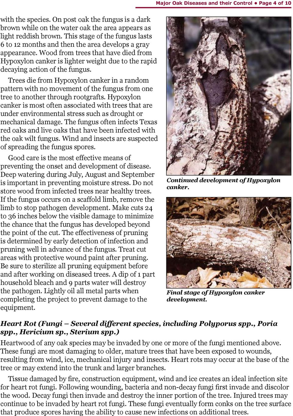 Wood from trees that have died from Hypoxylon canker is lighter weight due to the rapid decaying action of the fungus.