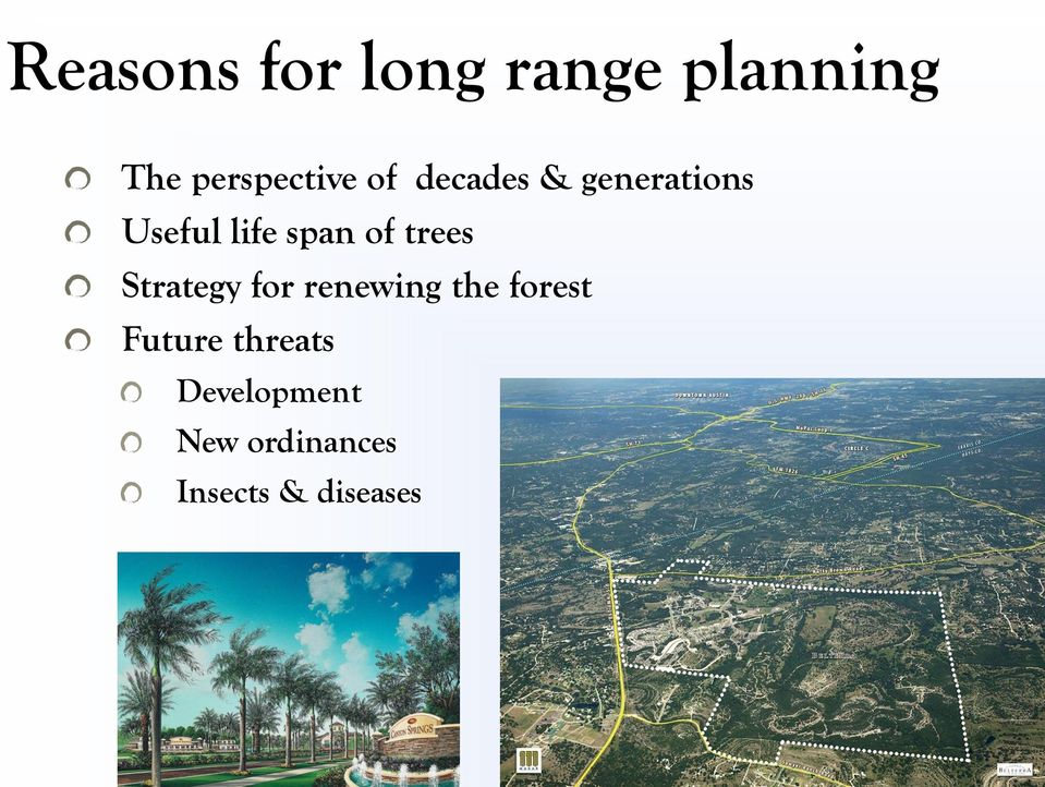 trees Strategy for renewing the forest Future