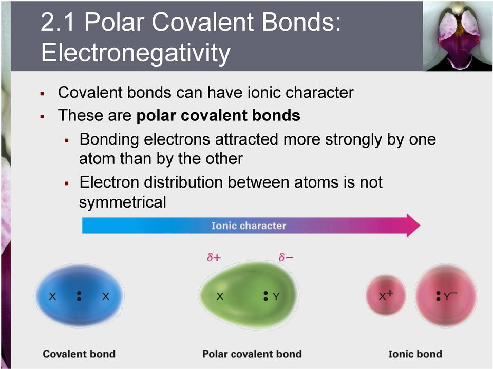 Bonding electrons attracted more strongly by one atom than