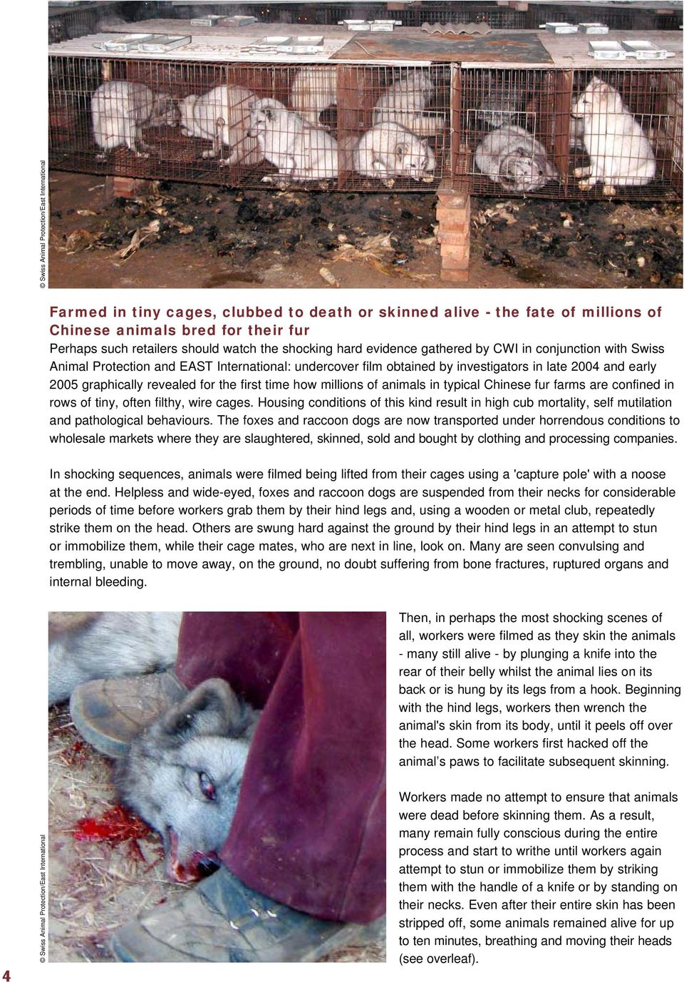 late 2004 and early 2005 graphically revealed for the first time how millions of animals in typical Chinese fur farms are confined in rows of tiny, often filthy, wire cages.