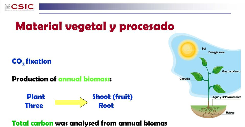 biomass: Plant Three Shoot (fruit)
