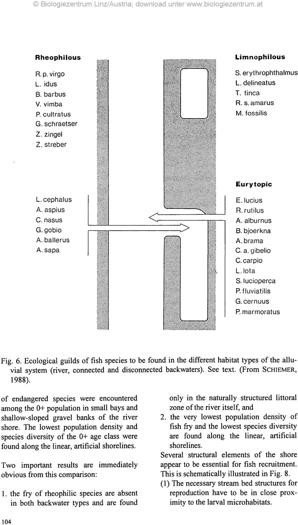 Ecological guilds of fish species to be found in the different habitat types of the alluvial system (river, connected and disconnected backwaters). See text. (From SCHIEMER, 1988).