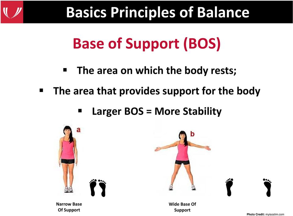 support for the body Larger BOS = More Stability Narrow