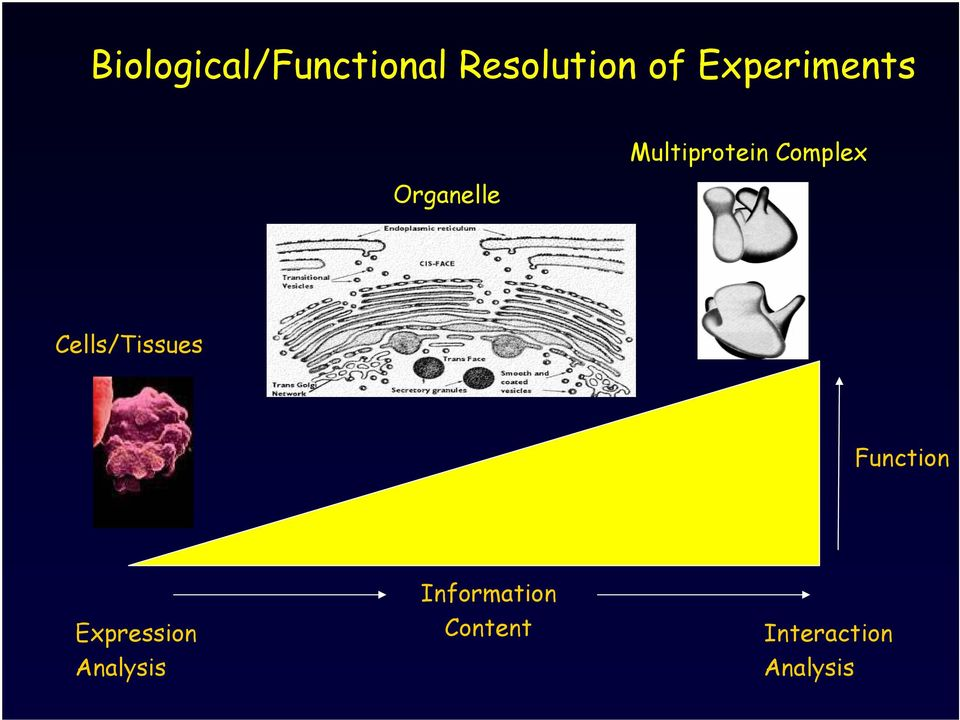 Complex Cells/Tissues Function
