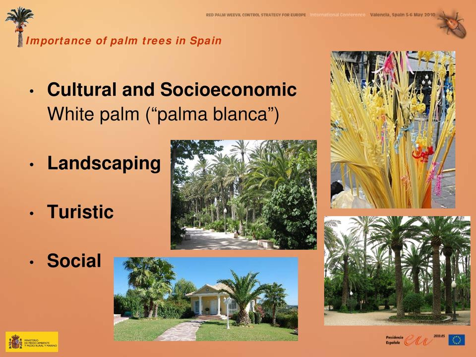 Socioeconomic White palm (