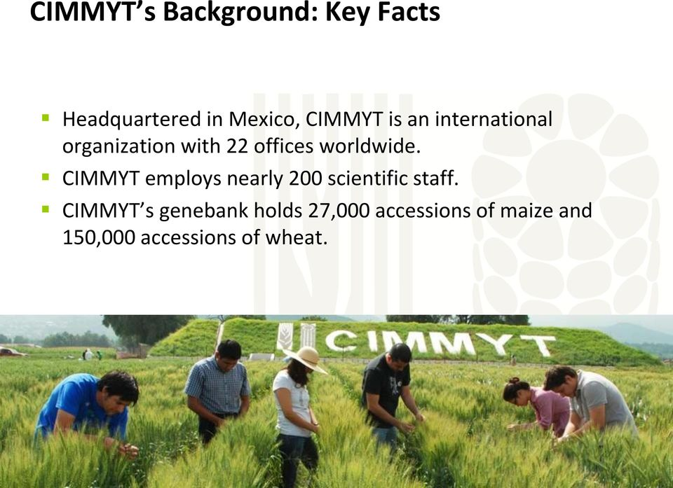 CIMMYT employs nearly 200 scientific staff.