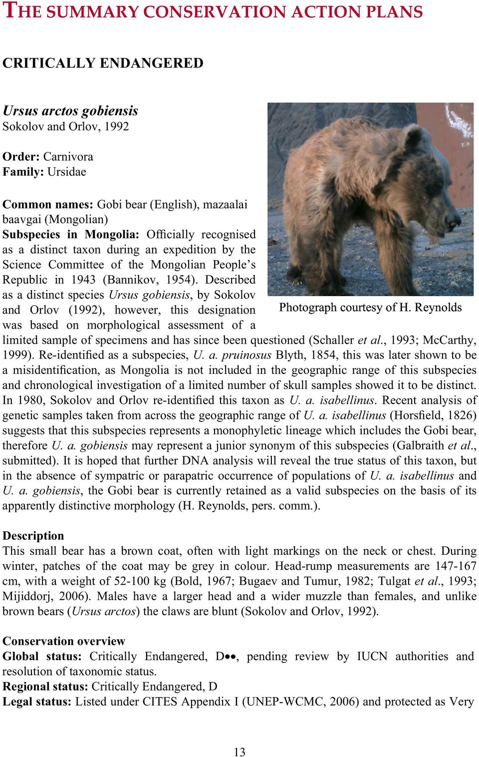 Described as a distinct species Ursus gobiensis, by Sokolov and Orlov (1992), however, this designation was based on morphological assessment of a Photograph courtesy of H.