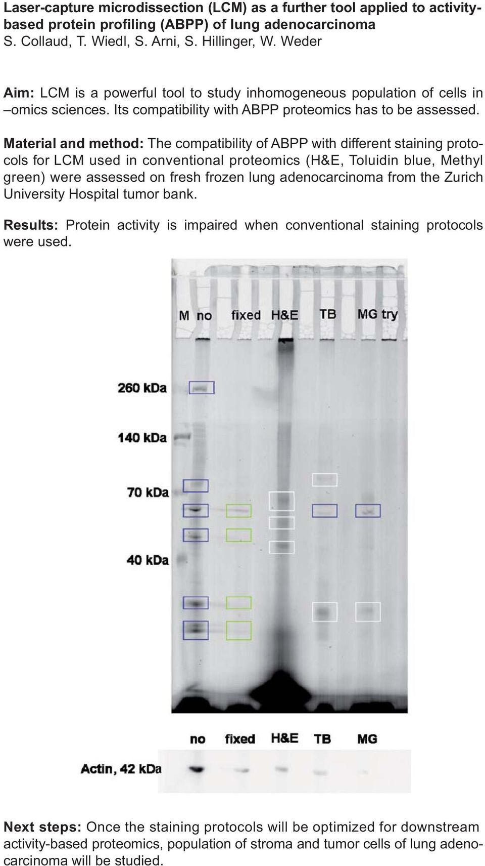 Material and method: The compatibility of ABPP with different staining protocols for LCM used in conventional proteomics (H&E, Toluidin blue, Methyl green) were assessed on fresh frozen lung