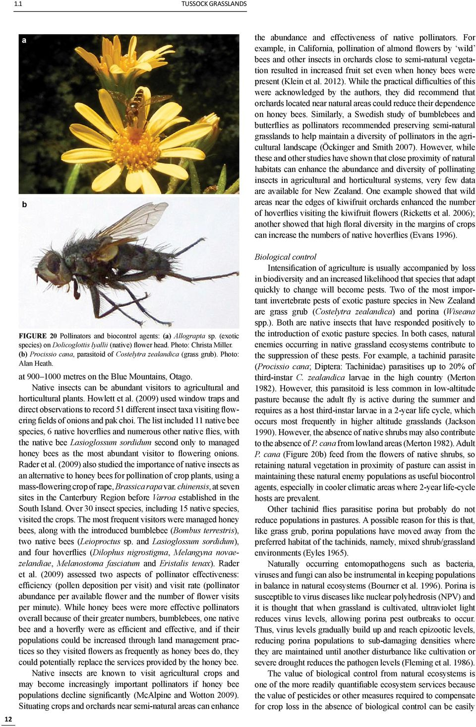 Native insects can be abundant visitors to agricultural and horticultural plants. Howlett et al.