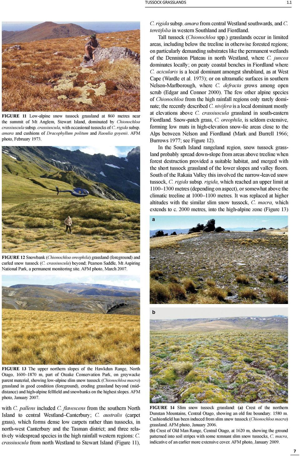 teretifolia in western Southland and Fiordland. Tall tussock (Chionochloa spp.