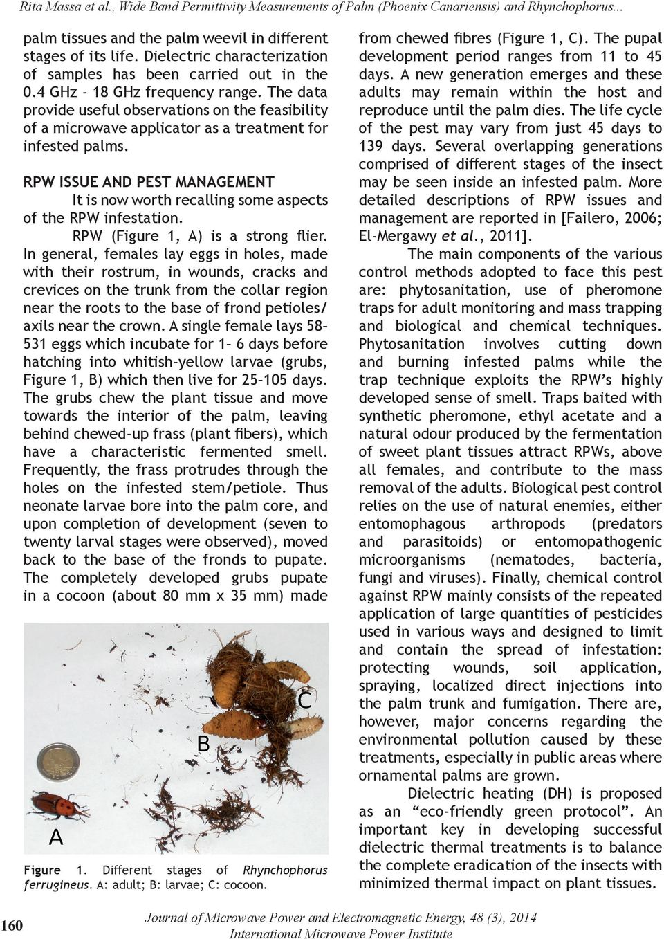 RPW ISSUE AND PEST MANAGEMENT It is now worth recalling some aspects of the RPW infestation. RPW (Figure 1, A) is a strong flier.