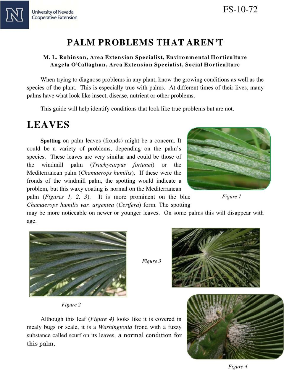 conditions as well as the species of the plant. This is especially true with palms. At different times of their lives, many palms have what look like insect, disease, nutrient or other problems.