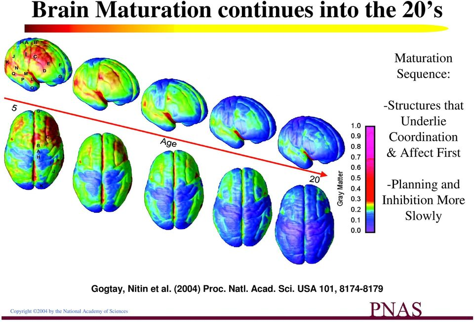 Right lateral and top views of the dynamic sequence of GM maturation over the cortical
