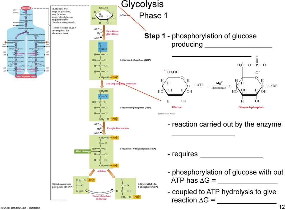 requires - phosphorylation of glucose with out ATP