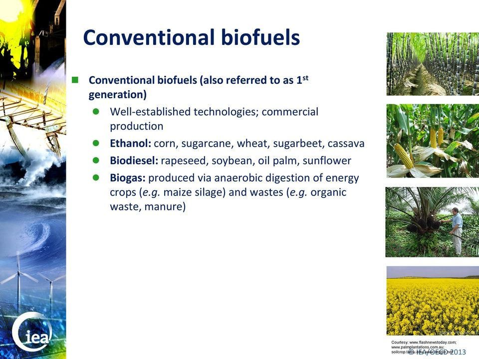 palm, sunflower Biogas: produced via anaerobic digestion of energy crops (e.g. maize silage) and wastes (e.g. organic waste, manure) Courtesy: www.