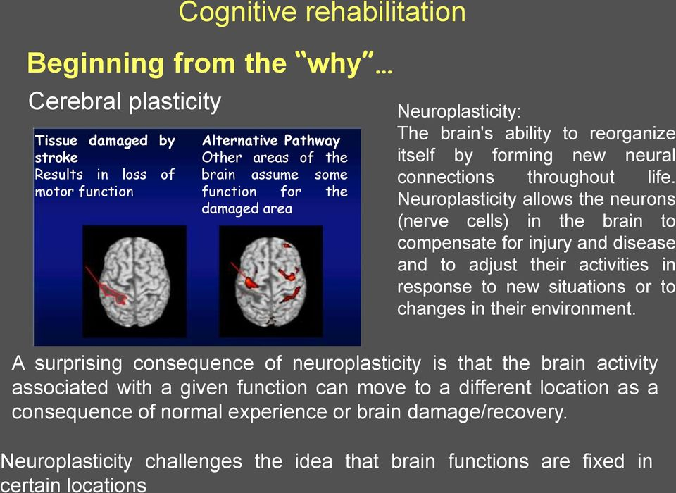 Neuroplasticity allows the neurons (nerve cells) in the brain to compensate for injury and disease and to adjust their activities in response to new situations or to changes in their environment.