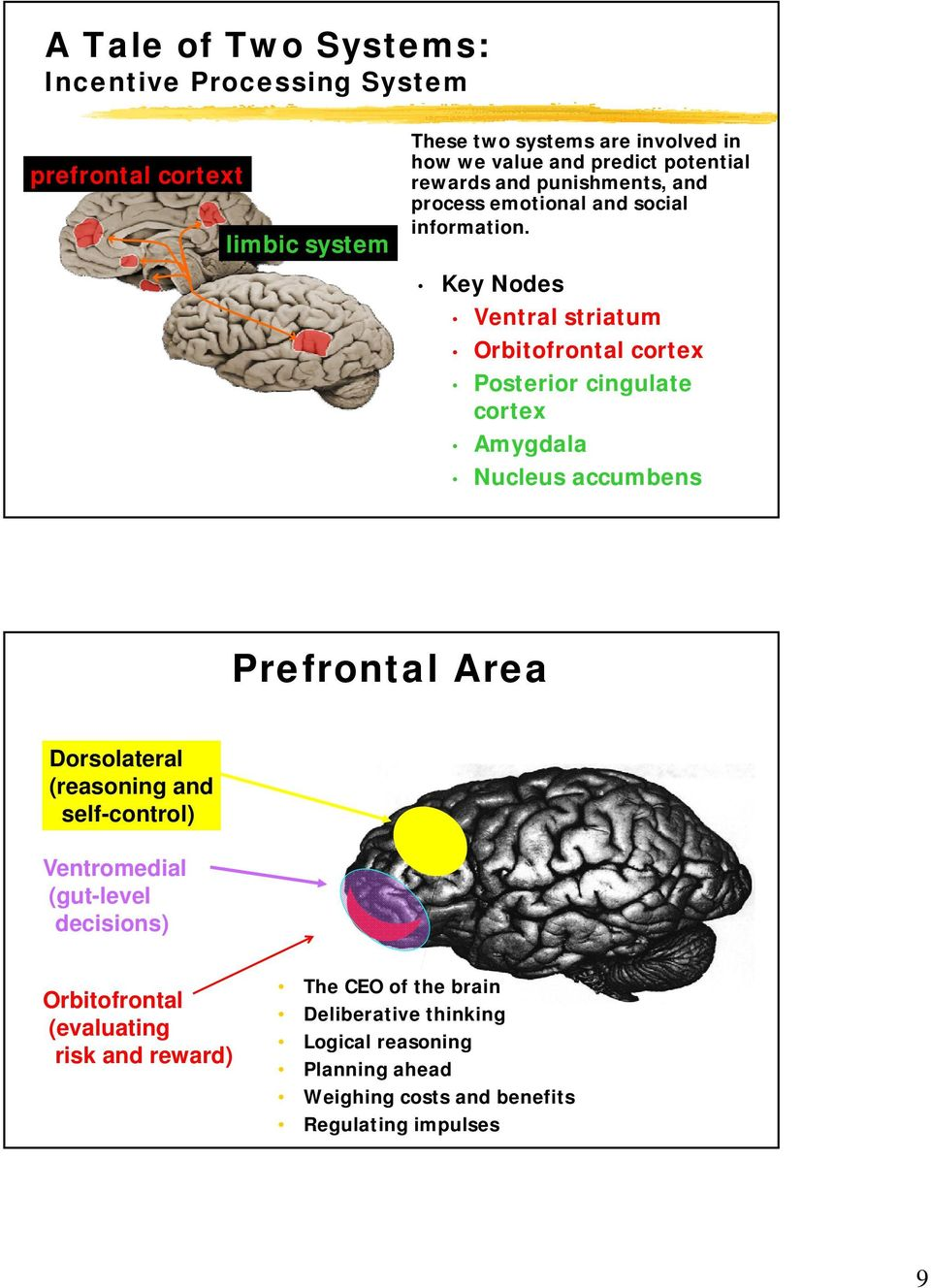 Key Nodes Ventral striatum Orbitofrontal cortex Posterior cingulate cortex Amygdala Nucleus accumbens Prefrontal Area Dorsolateral (reasoning and