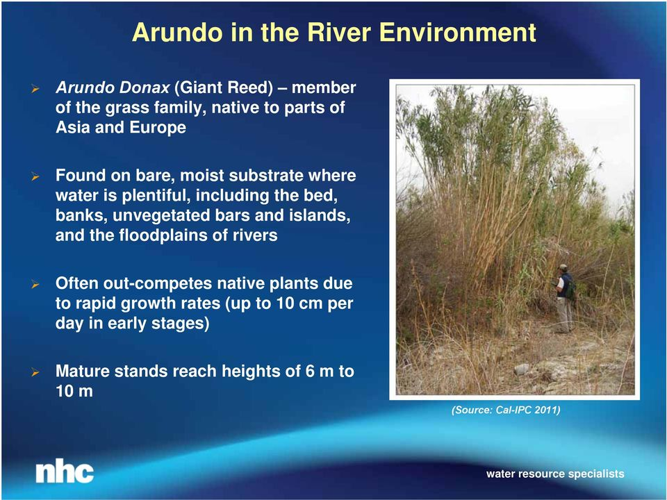 unvegetated bars and islands, and the floodplains of rivers Often out-competes native plants due to rapid