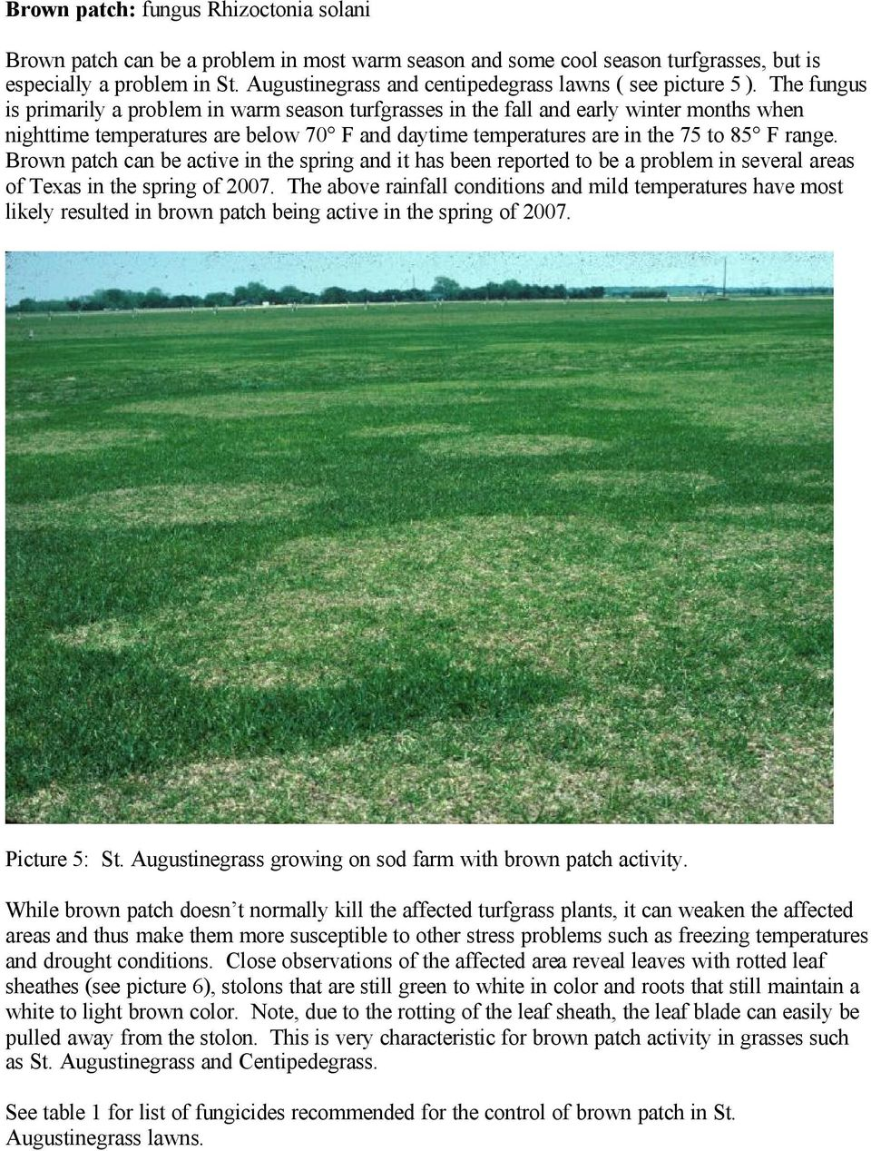 The fungus is primarily a problem in warm season turfgrasses in the fall and early winter months when nighttime temperatures are below 70 F and daytime temperatures are in the 75 to 85 F range.