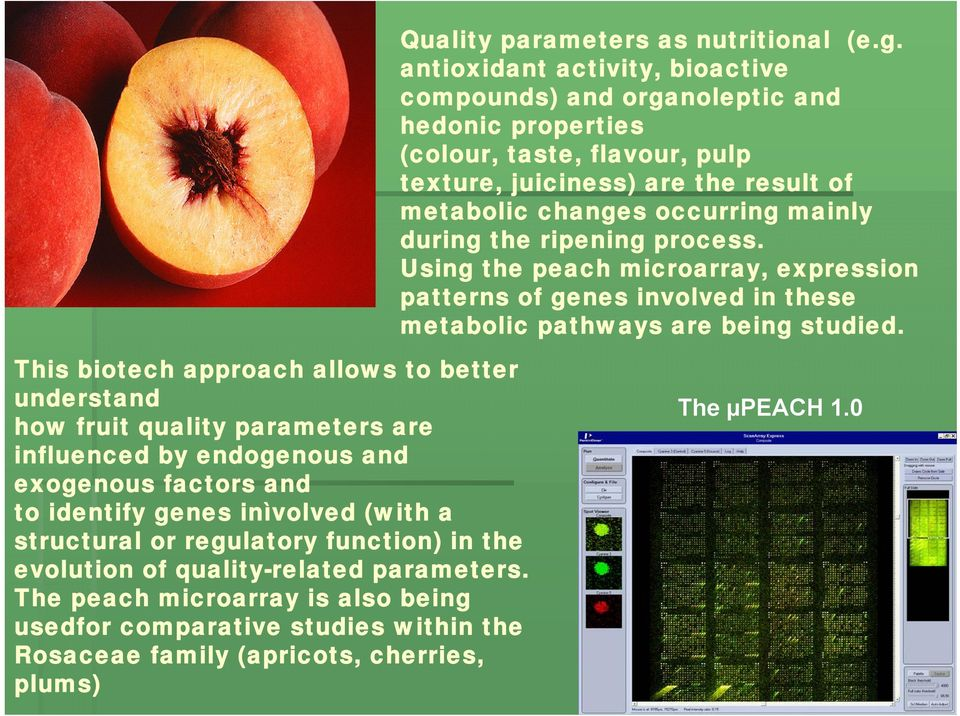 during the ripening process. Using the peach microarray, expression patterns of genes involved in these metabolic pathways are being studied.