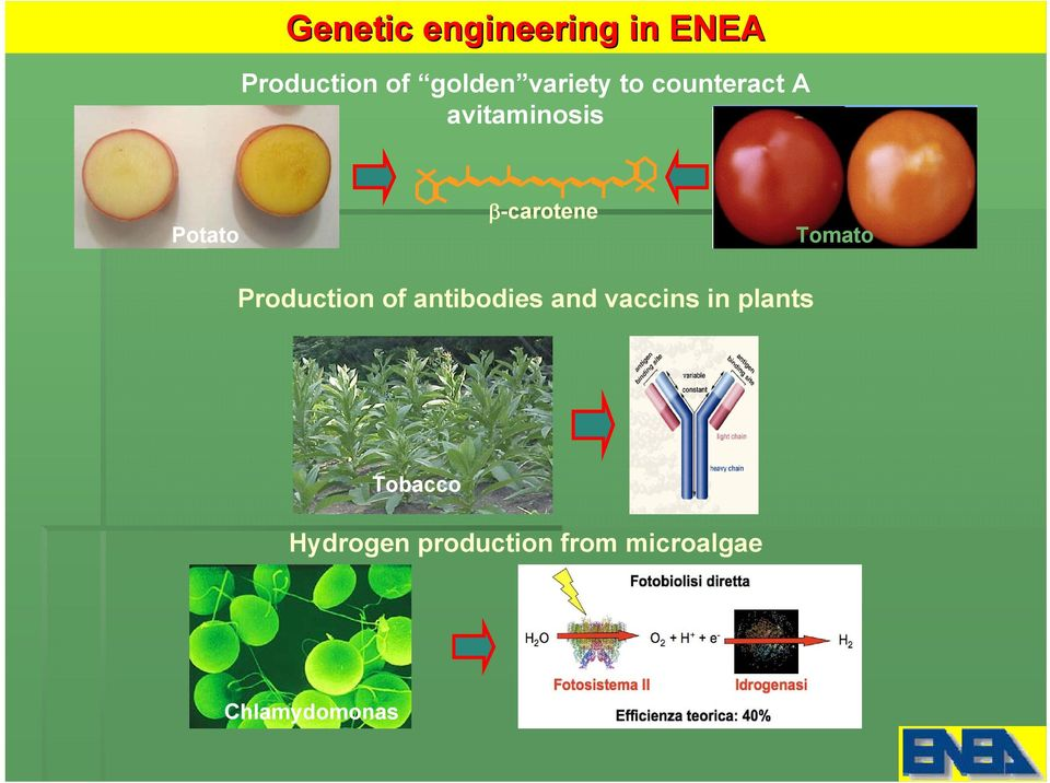 β-carotene Tomato Production of antibodies and