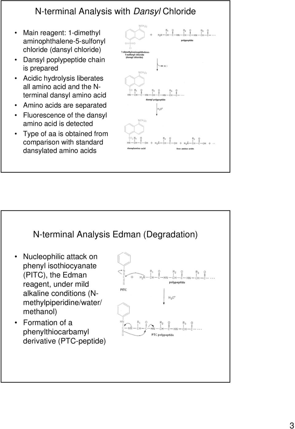 Type of aa is obtained from comparison with standard dansylated amino acids N-terminal Analysis Edman (Degradation) Nucleophilic attack on phenyl
