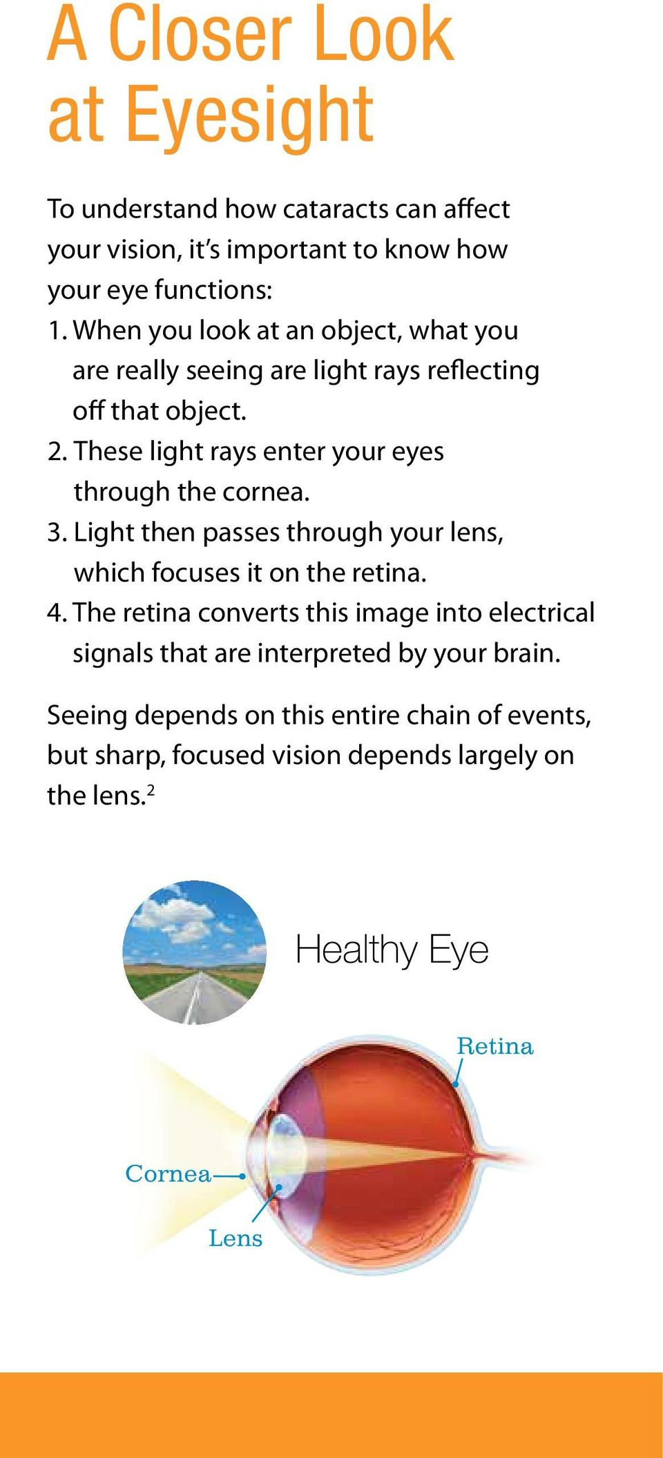 These light rays enter your eyes through the cornea. 3. Light then passes through your lens, which focuses it on the retina. 4.