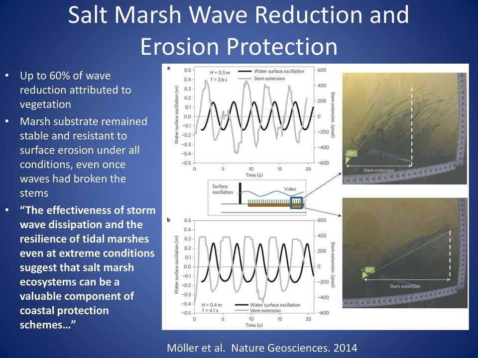 storm wave dissipation and the resilience of tidal marshes even at extreme conditions suggest that salt marsh