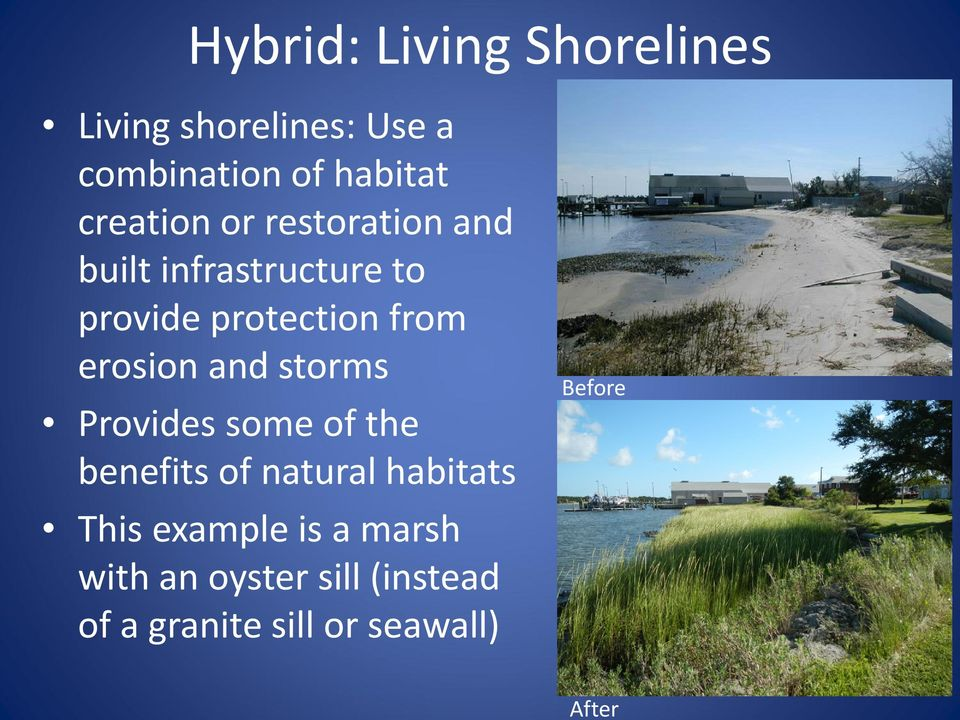 from erosion and storms Provides some of the benefits of natural habitats This
