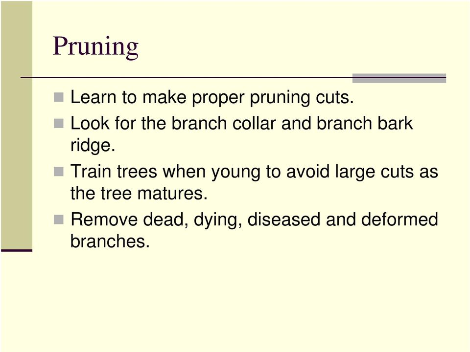 Train trees when young to avoid large cuts as the