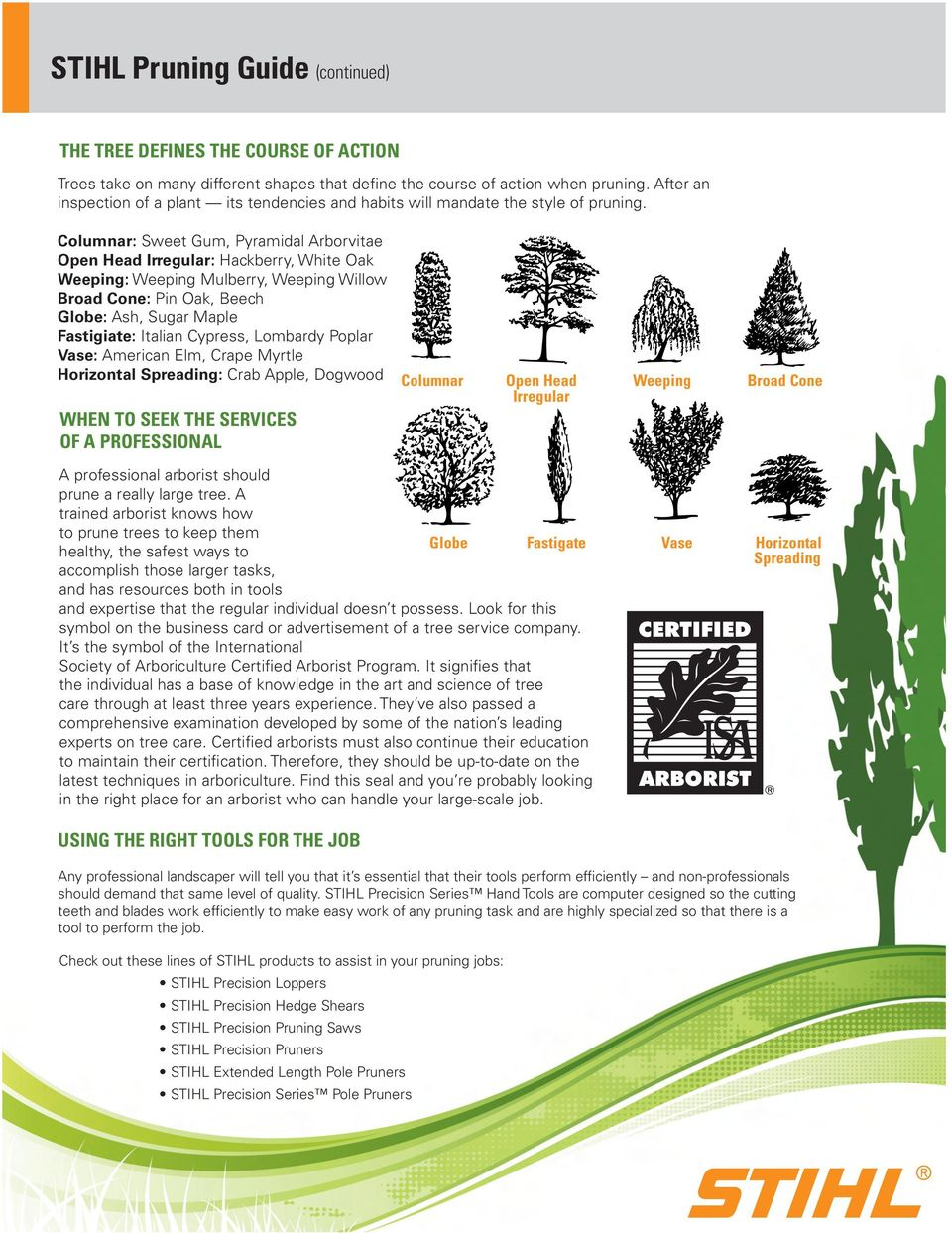Columnar: Sweet Gum, Pyramidal Arborvitae Open Head Irregular: Hackberry, White Oak Weeping: Weeping Mulberry, Weeping Willow Broad Cone: Pin Oak, Beech Globe: Ash, Sugar Maple Fastigiate: Italian