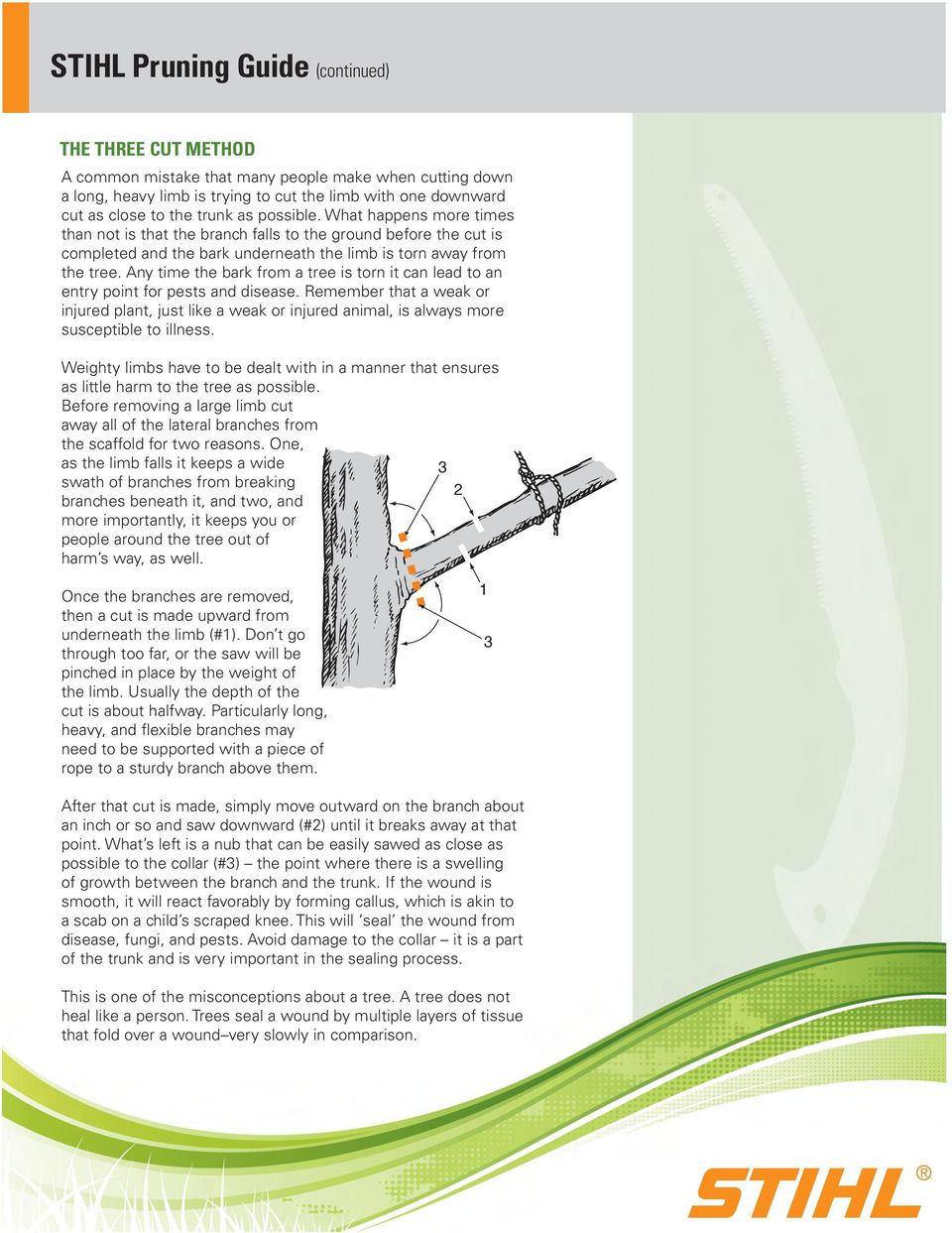 Any time the bark from a tree is torn it can lead to an entry point for pests and disease.