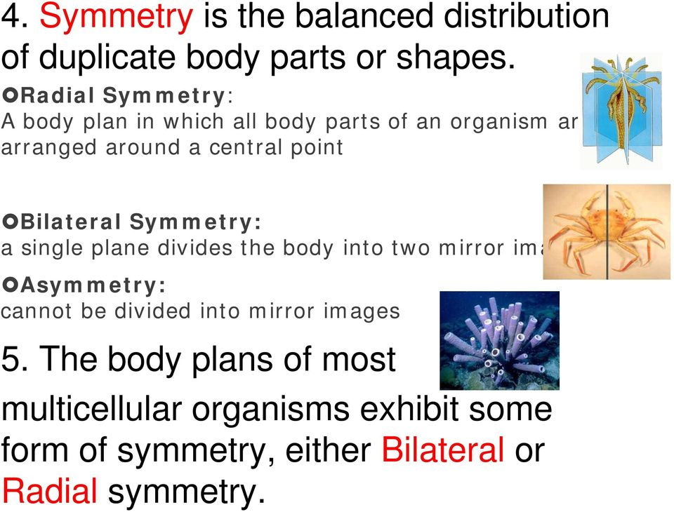 Bilateral Symmetry: a single plane divides the body into two mirror images Asymmetry: cannot be divided