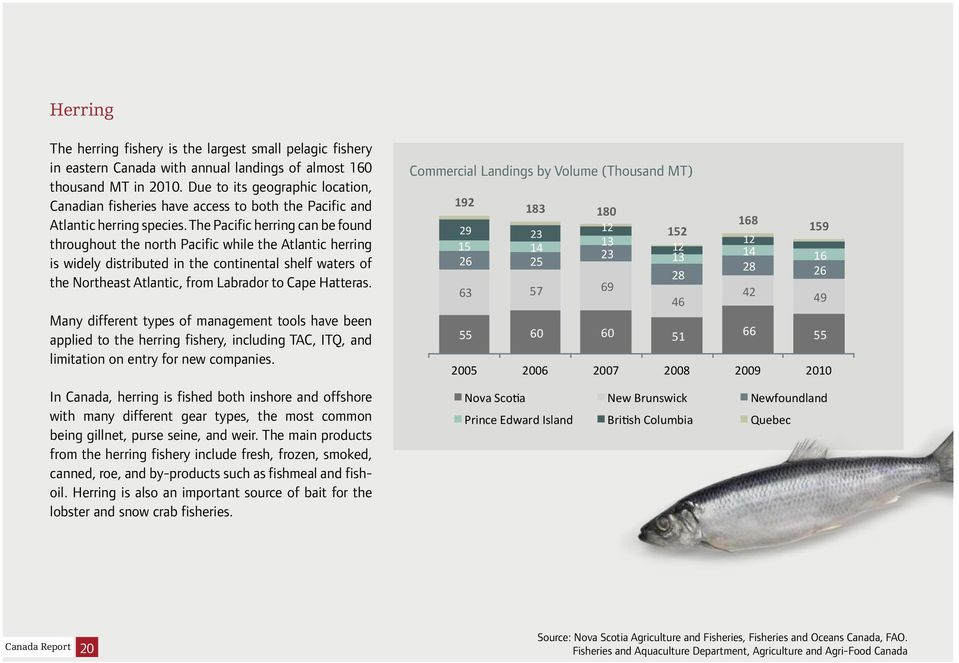 The Pacific herring can be found throughout the north Pacific while the Atlantic herring is widely distributed in the continental shelf waters of the Northeast Atlantic, from Labrador to Cape