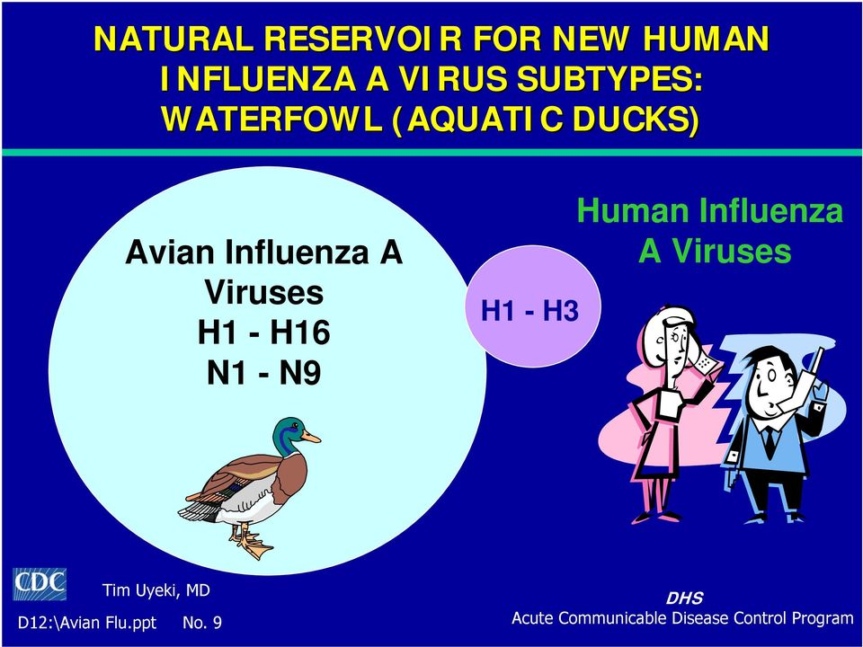 Influenza A Viruses H1 - H16 N1 - N9 H1 - H3 Human