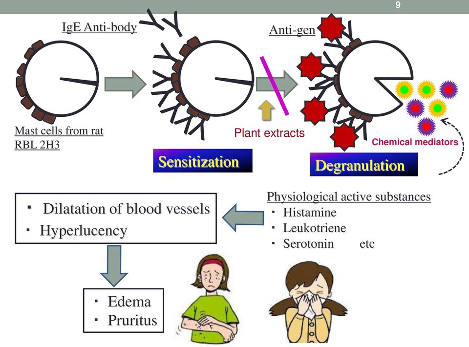 mediators Dilatation of blood vessels Hyperlucency
