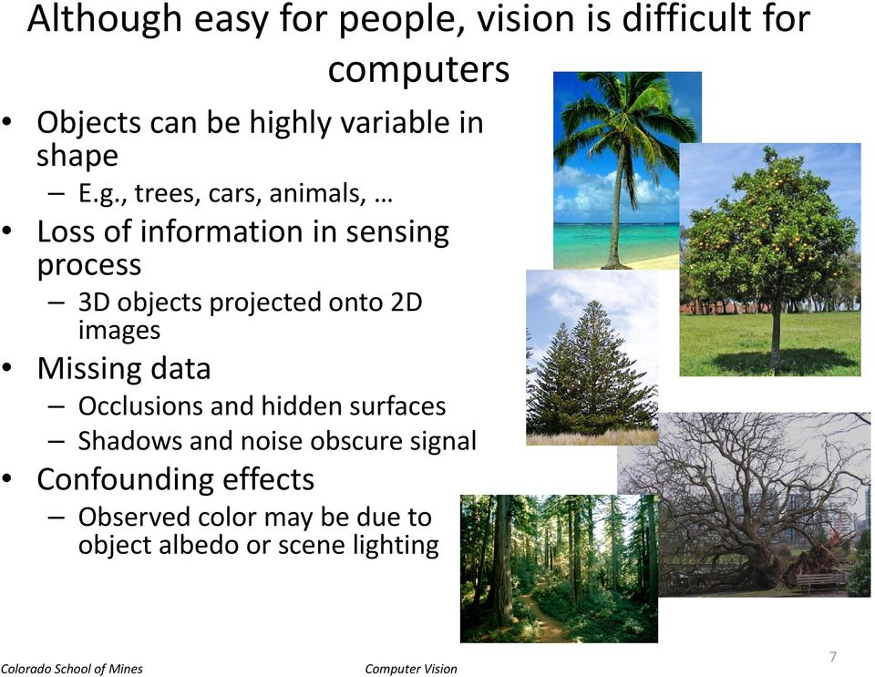 , trees, cars, animals, Loss of information in sensing process 3D objects projected onto