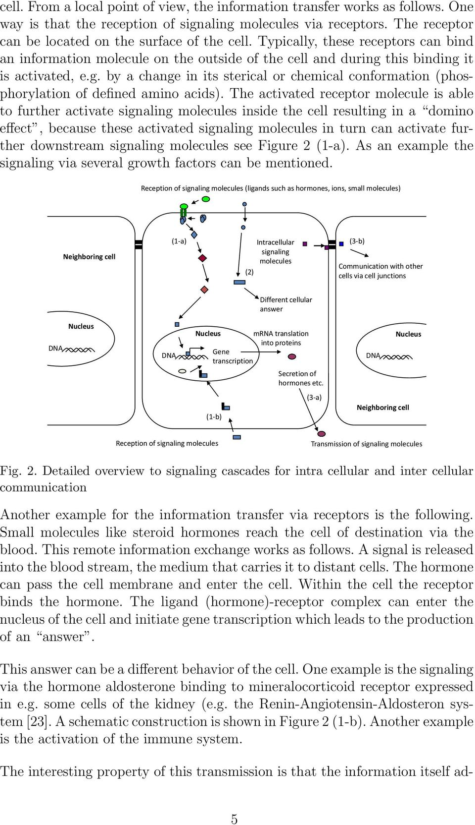 The activated receptor molecule is able to further activate signaling molecules inside the cell resulting in a domino effect, because these activated signaling molecules in turn can activate further
