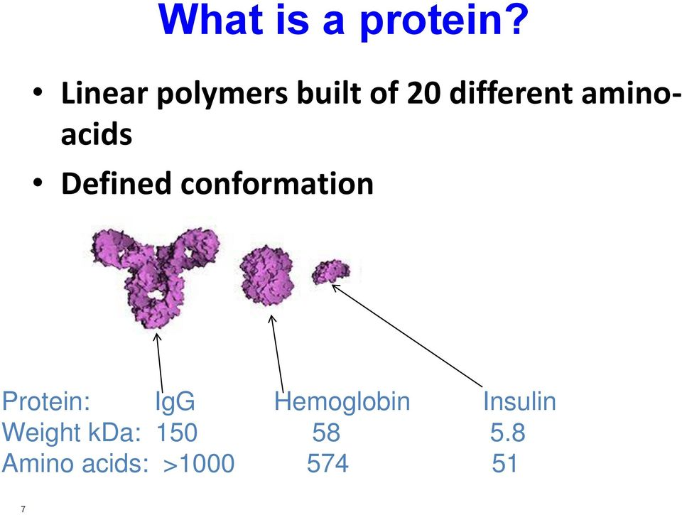 aminoacids Defined conformation Protein: