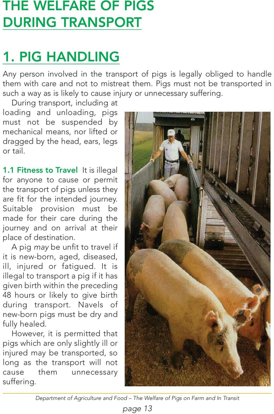 During transport, including at loading and unloading, pigs must not be suspended by mechanical means, nor lifted or dragged by the head, ears, legs or tail. 1.