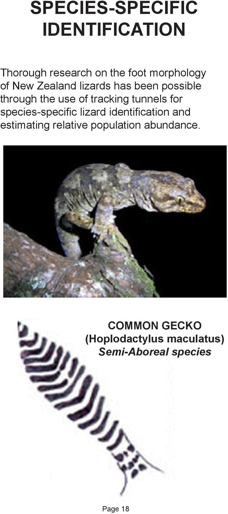 for species-specific lizard identification and estimating relative