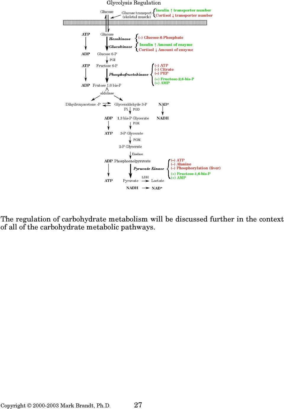 of all of the carbohydrate metabolic