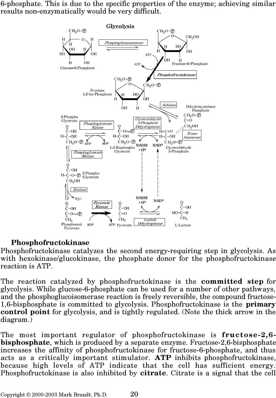 The reaction catalyzed by phosphofructokinase is the committed step for glycolysis.
