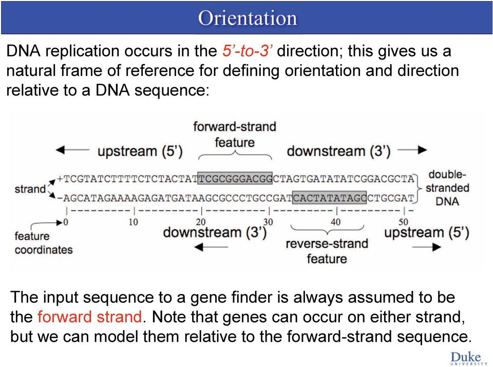 input sequence to a gene finder is always assumed to be the forward strand.