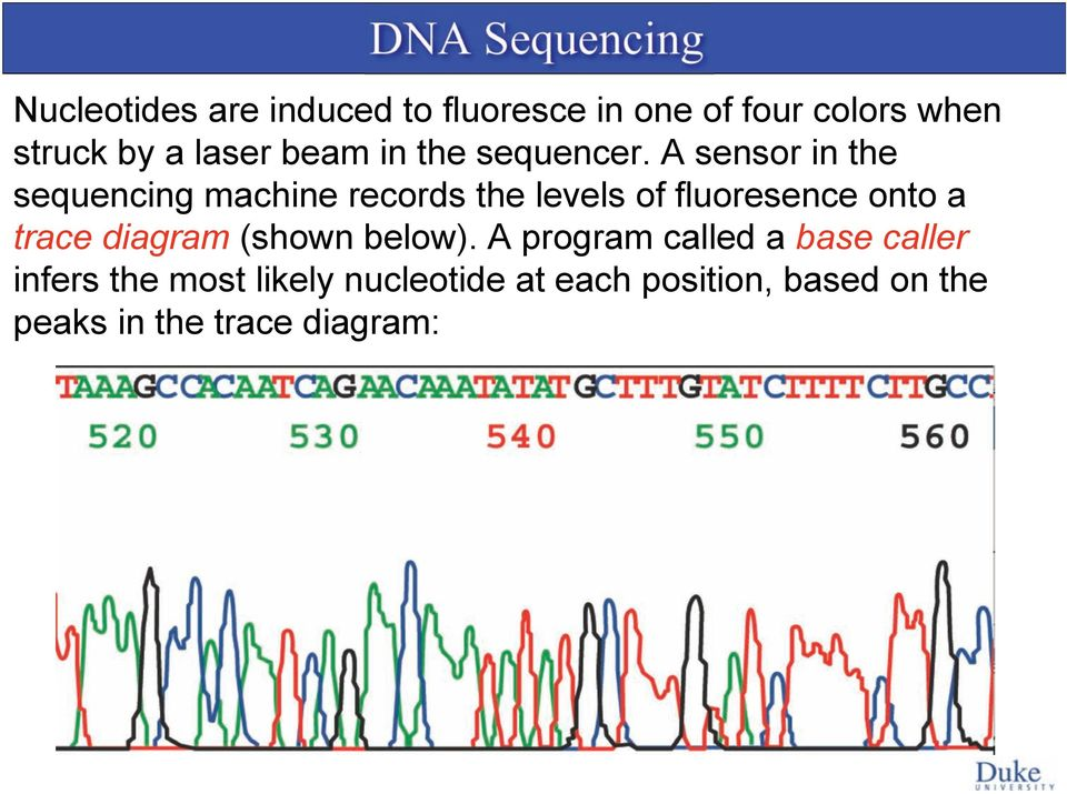 A sensor in the sequencing machine records the levels of fluoresence onto a trace