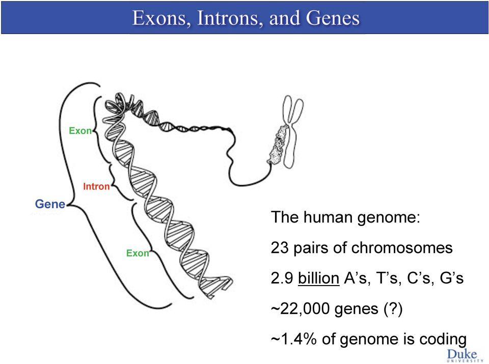 of chromosomes 2.