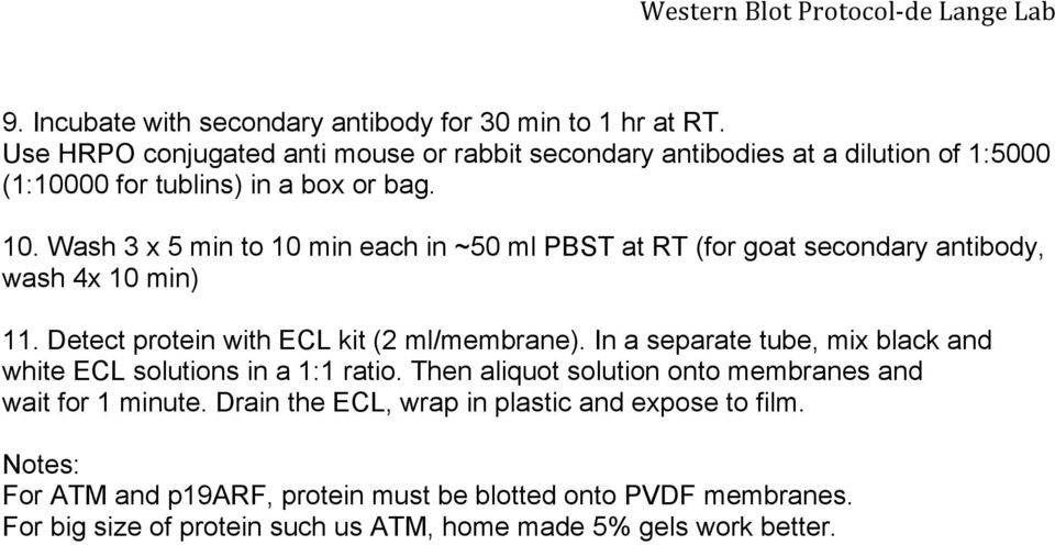 Wash 3 x 5 min to 10 min each in ~50 ml PBST at RT (for goat secondary antibody, wash 4x 10 min) 11. Detect protein with ECL kit (2 ml/membrane).