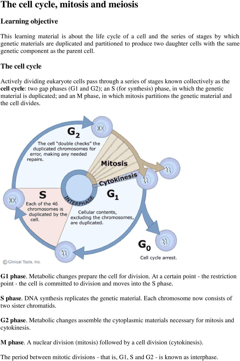 The cell cycle Actively dividing eukaryote cells pass through a series of stages known collectively as the cell cycle: two gap phases (G1 and G2); an S (for synthesis) phase, in which the genetic
